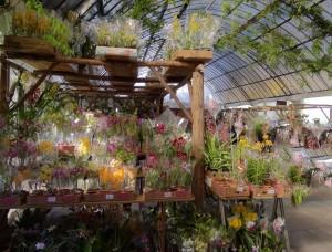 XI Exposição Internacional de Orquídeas